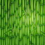 Bambusowy tło Obrazy Royalty Free