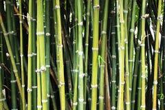Bambusowy tło Fotografia Royalty Free
