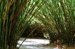 Bambusowy wejście Fotografia Stock
