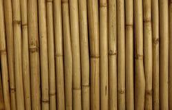 Bambusowy zbliżenie Zdjęcia Royalty Free