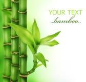 bambusowy zen Obraz Stock