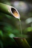 bambuspringbrunn Royaltyfria Bilder