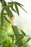 Bambuspringbrunn Fotografering för Bildbyråer