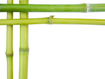 Bambusränder Stockfoto