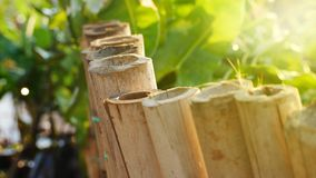 Bambusrohr stockfoto