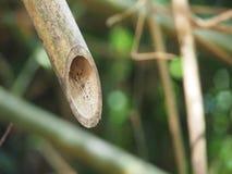 Bambusschnitt Stockbild