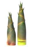 Bambusschoß auf weißem backgroud Lizenzfreies Stockfoto
