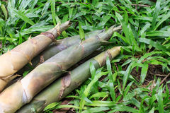 Bambusschosse Lizenzfreies Stockfoto