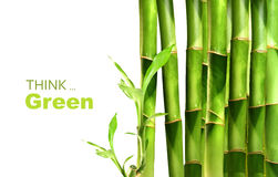 Bambusschosse gestapelt auf Weiß Stockfotos