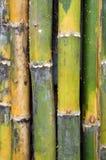 Bambusse Stockbilder