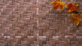 Bambusspinnen Lizenzfreies Stockbild