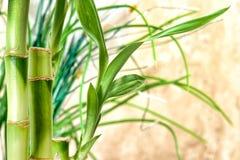 Bambusstämme und Blätter Lizenzfreie Stockfotografie