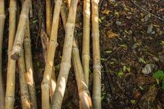 Bambusstapel auf feuchtem Boden unter Schattenbäumen Stockbild