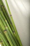 Bambussteuerknüppel stockbild