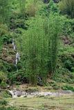 Bambusstiele lizenzfreie stockbilder