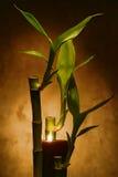 Bambusstämme mit brennenden Kerzen für Meditation Lizenzfreies Stockbild