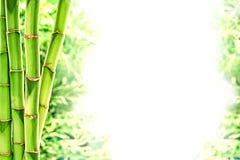 Bambusstämme und wildes Gras über weißem Hintergrund Stockfotografie