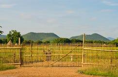 Bambustaket. Arkivbild
