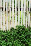 Bambustaket - grönt träd. Royaltyfri Fotografi