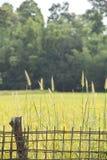 Bambustaket och gräs Royaltyfria Foton