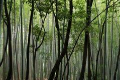 Bambustammar i olika skuggor av gräsplan i en bambuskog royaltyfri bild