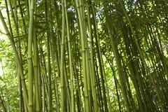 bambustjälkar Arkivbild