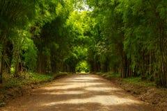 Bambustunnellandschaftshintergrund Lizenzfreies Stockfoto