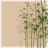 Bambusvektorabbildung. Stockfoto
