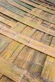 Bambusverbreitung Lizenzfreies Stockbild