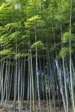 Bambuswald in Adashino-nenbutsuji Tempel Stockfotografie