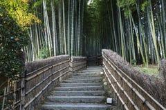 Bambuswald in Adashino-nenbutsuji Tempel Lizenzfreie Stockbilder