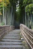 Bambuswald in Adashino-nenbutsuji Tempel Stockfoto