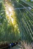 Bambuswald bei Arashiyama Stockbild
