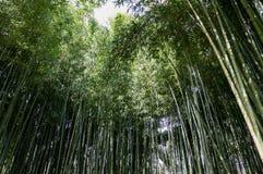 Bambuswald bei Ninfa Italien stockbild