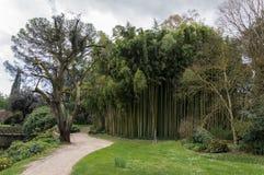 Bambuswald bei Ninfa Italien stockfotos