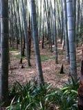 Bambuswald in China Stockfotografie