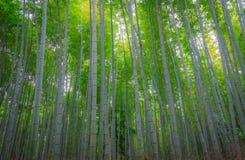 Bambuswald in Kyoto Stockfoto