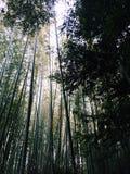 Bambuswald in Kyoto Lizenzfreie Stockfotografie