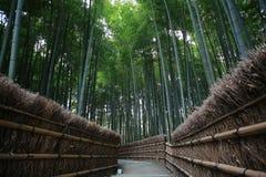 Bambuswald in Kyoto Japan Lizenzfreies Stockfoto