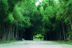 Bambuswald und Bahn lizenzfreies stockbild