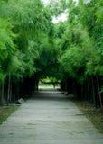 Bambuswald und Bahn lizenzfreie stockbilder