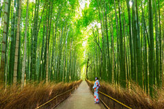 Bambuswald von Arashiyama nahe Kyoto, Japan Lizenzfreies Stockfoto