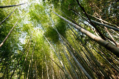 Bambuswaldhimmel Stockfoto