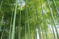 Bambuswaldung Lizenzfreie Stockfotos