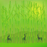 Bambuswaldung Stockbilder