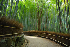 Bambuswaldung Stockfoto