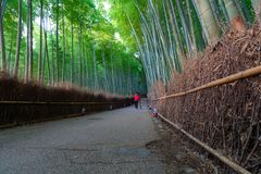 Bambuswaldung Sagano bei Arashiyama in Kyoto Japan lizenzfreies stockfoto