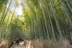 Bambuswaldweg Stockfotografie