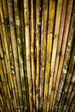 Bambuswand Lizenzfreies Stockbild