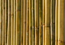 Bambuswand Stockbild